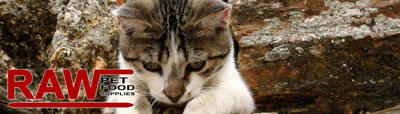 Raw Cat Treats